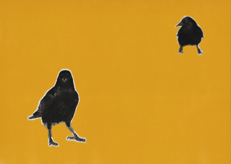 «Ворон считать престижно». Лекция орнитолога Ольги Калашниковой